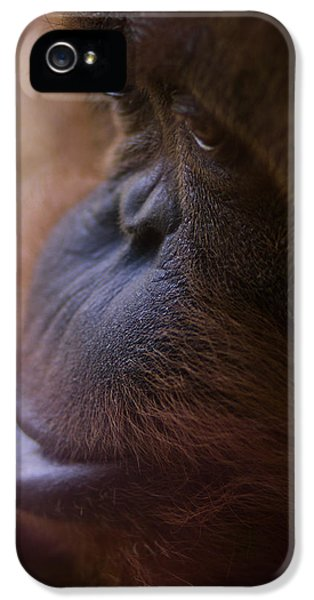 Eyes IPhone 5 / 5s Case by Shane Holsclaw