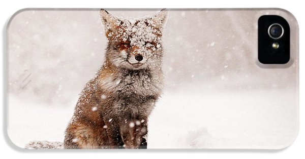 Smiling iPhone 5 Cases - Fairytale Fox _ Red Fox in a Snow Storm iPhone 5 Case by Roeselien Raimond