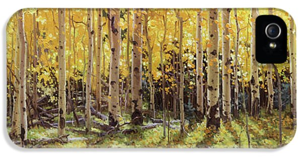 Gay iPhone 5 Cases - Fall Aspen Panorama iPhone 5 Case by Gary Kim