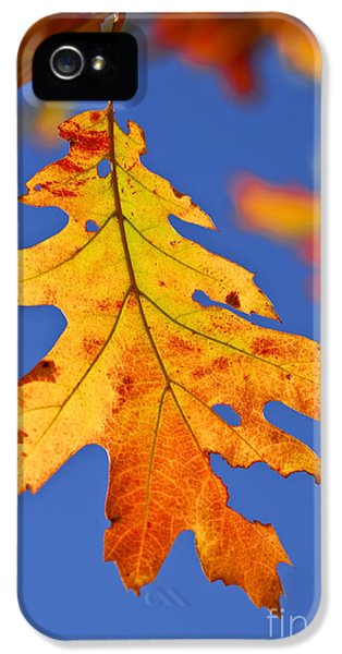 Leaf iPhone 5 Cases - Fall oak leaf iPhone 5 Case by Elena Elisseeva