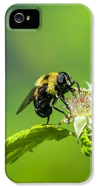 Bee iPhone 5 Cases - Fame is a bee iPhone 5 Case by Bob Orsillo
