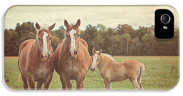 Horse iPhone 5 Cases - Family iPhone 5 Case by Carrie Ann Grippo-Pike