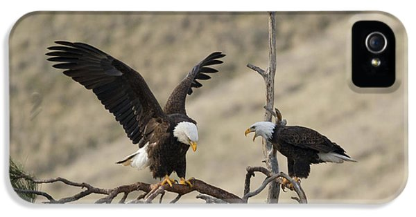 American Bald Eagle iPhone 5 Cases - Family Talk iPhone 5 Case by Mike Dawson