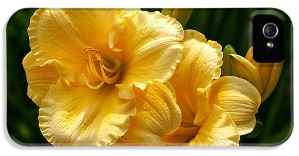 Fancy Yellow Daylilies IPhone 5 / 5s Case by Rona Black