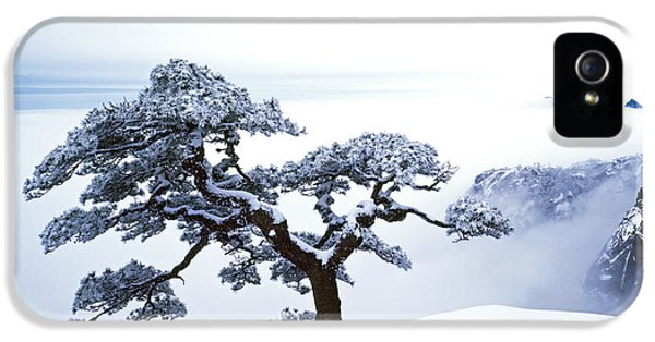 Blue Trees iPhone 5 Cases - Fare-Well Pine Tree iPhone 5 Case by King Wu