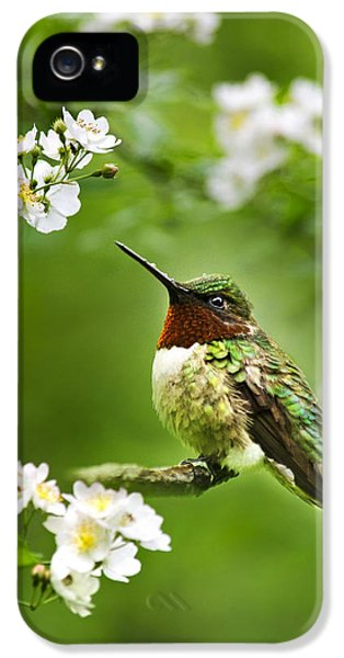 Fauna And Flora - Hummingbird With Flowers IPhone 5 / 5s Case by Christina Rollo
