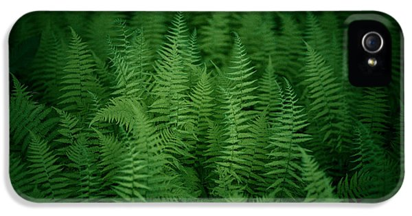 Fern iPhone 5 Cases - Fern Bed iPhone 5 Case by Shane Holsclaw