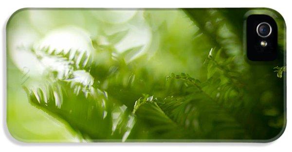 Fern iPhone 5 Cases - Fern Dream iPhone 5 Case by Shane Holsclaw