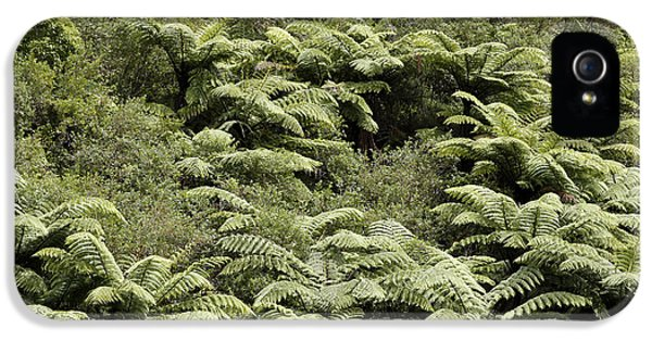 Bush iPhone 5 Cases - Fern trees iPhone 5 Case by Les Cunliffe