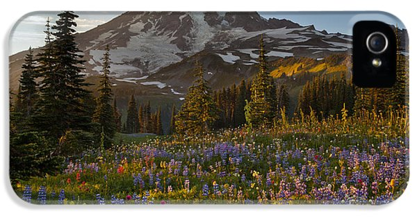 Mount Rainier iPhone 5 Cases - Field of Dreams iPhone 5 Case by Mike Reid