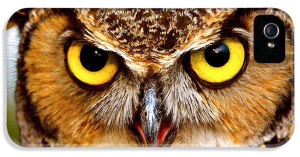 Bird Watcher iPhone 5 Cases - Fierce Eyes iPhone 5 Case by Parker Cunningham