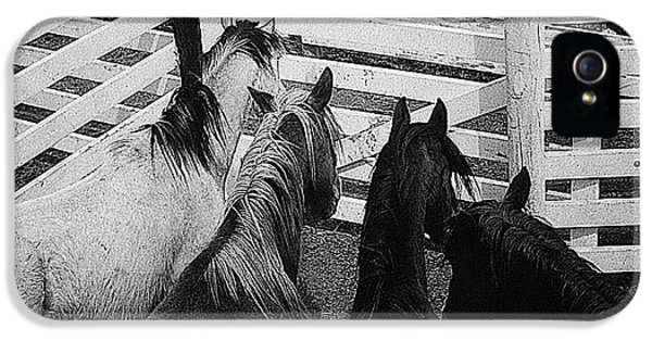 Four Horsemen Of The Apocalypse iPhone 5 Cases - Film homage Rudolph Valentino The Four Horsemen of the  Apocalypse Aberdeen SD 1921-1964  iPhone 5 Case by David Lee Guss