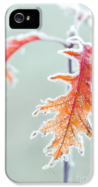 Leaf iPhone 5 Cases - First Frost iPhone 5 Case by Lucid Mood