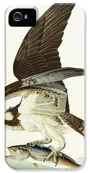 Hawk iPhone 5 Cases - Fish Hawk iPhone 5 Case by John James Audubon
