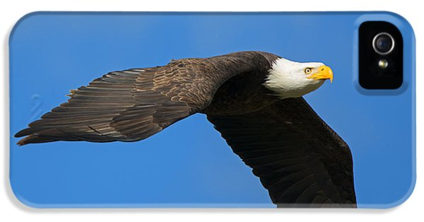 American Bald Eagle iPhone 5 Cases - Flaps Down iPhone 5 Case by Mike Dawson