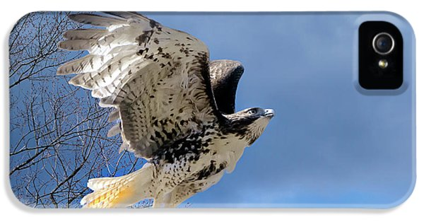 Red Tailed Hawk iPhone 5 Cases - Flight of the Red tail iPhone 5 Case by Bill  Wakeley