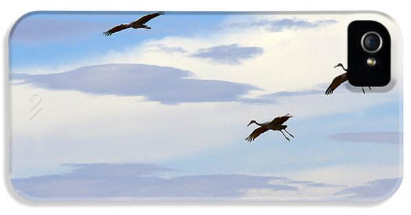 Trio iPhone 5 Cases - Flight of the Sandhill Cranes iPhone 5 Case by Mike  Dawson
