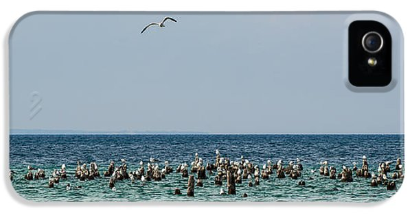 Sea iPhone 5 Cases - Flock of Seagulls iPhone 5 Case by Sebastian Musial
