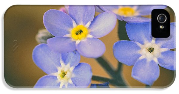 Forget Me Not iPhone 5 Cases - Forget Me Nots iPhone 5 Case by Marco Oliveira