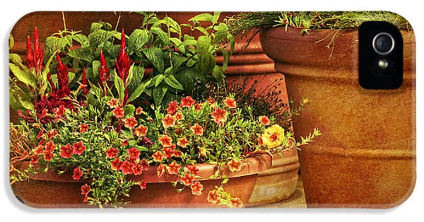 Potting Shed iPhone 5 Cases - Flower Pots iPhone 5 Case by Nikolyn McDonald