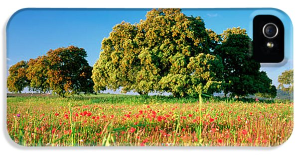 Andalusia iPhone 5 Cases - Flowers In A Field, Andalusia, Spain iPhone 5 Case by Panoramic Images