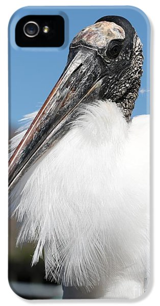 Fluffy Wood Stork IPhone 5 / 5s Case by Carol Groenen