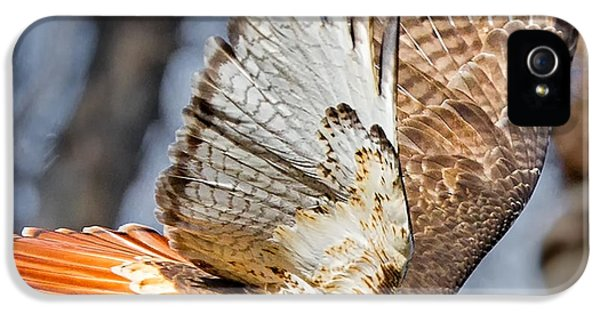 Fly Away IPhone 5 / 5s Case by Bill Wakeley