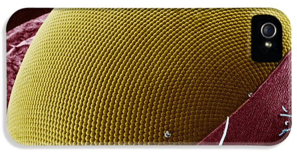 Arthropod iPhone 5 Cases - Fly Eye SEM iPhone 5 Case by Pir