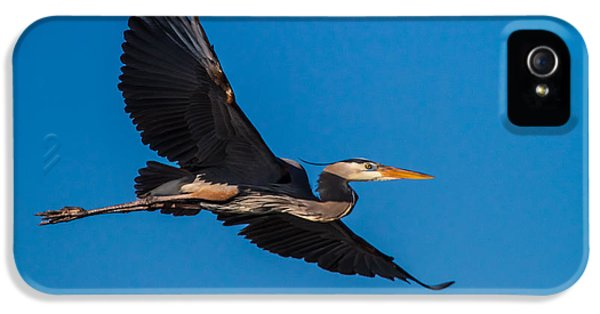 Sky iPhone 5 Cases - Flying Great Blue Heron iPhone 5 Case by Andres Leon