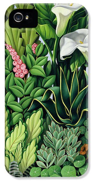 Garden iPhone 5 Cases - Foliage iPhone 5 Case by Catherine Abel