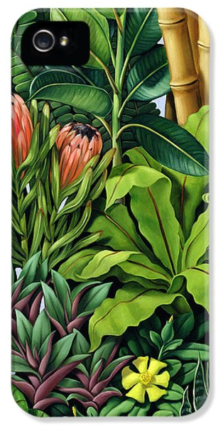 Foliage IIi IPhone 5 / 5s Case by Catherine Abel