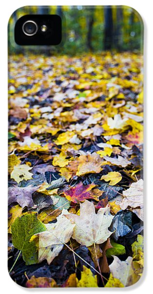 Foliage iPhone 5 Cases - Foliage iPhone 5 Case by Sebastian Musial