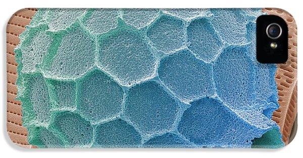 Foraminiferan IPhone 5 / 5s Case by Steve Gschmeissner