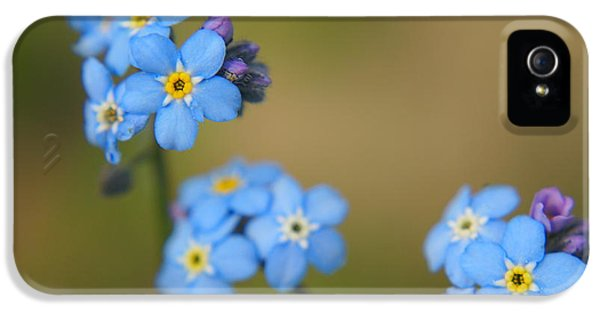 Forgotten iPhone 5 Cases - Forget Me Not 01 - s01r iPhone 5 Case by Variance Collections