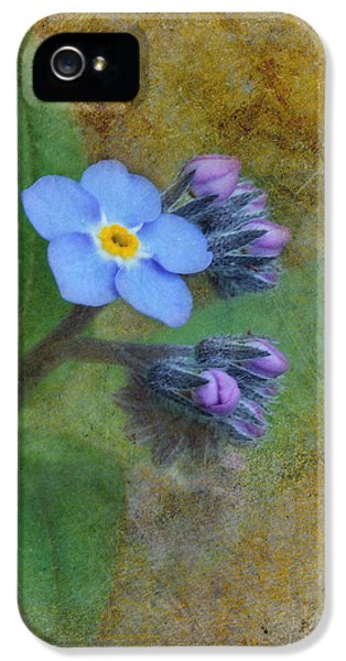Forget Me Not iPhone 5 Cases - Forget Me Not iPhone 5 Case by Angie Vogel