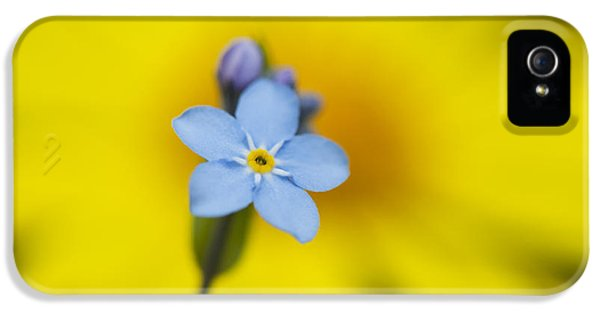 Forget Me Not iPhone 5 Cases - Forget Me Not Flower iPhone 5 Case by Tim Gainey