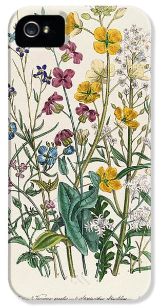 Forget-me-nots And Buttercups, Plate 13 From The Ladies Flower Garden, Published 1842 Colour Litho IPhone 5 / 5s Case by Jane Loudon