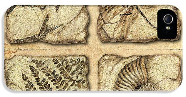 Fern iPhone 5 Cases - Fossils iPhone 5 Case by JQ Licensing