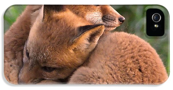 Bff iPhone 5 Cases - Fox Cubs Cuddle iPhone 5 Case by William Jobes
