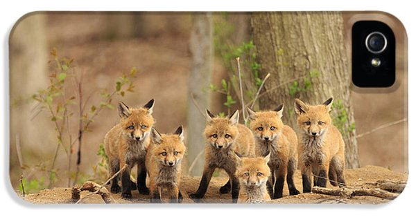 Red Fox iPhone 5 Cases - Fox Family Portrait iPhone 5 Case by Everet Regal