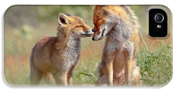 Fox Felicity - Mother And Fox Kit Showing Love And Affection IPhone 5 / 5s Case by Roeselien Raimond