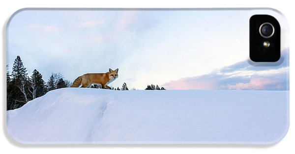 Red Fox iPhone 5 Cases - Fox of the North III iPhone 5 Case by Mary Amerman