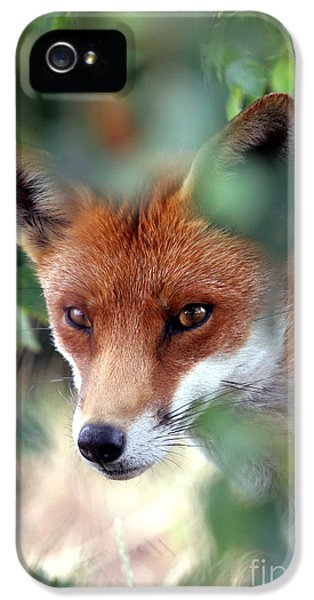 Red Fox iPhone 5 Cases - Fox through trees iPhone 5 Case by Tim Gainey