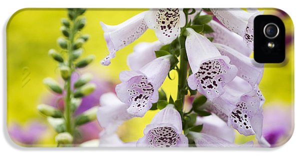 Poisonous iPhone 5 Cases - Foxgloves iPhone 5 Case by Tim Gainey