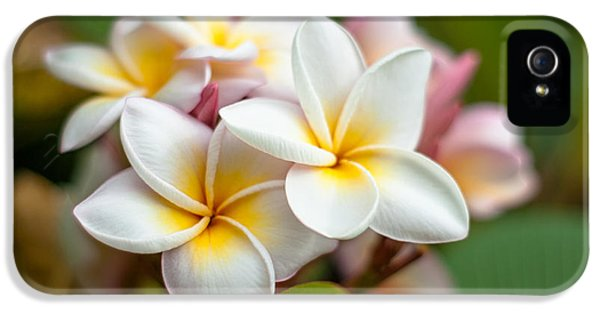 Yellow And White Plumeria Flower Frangipani iPhone 5 Cases - Frangipani bouquet iPhone 5 Case by Sheralee Stoll