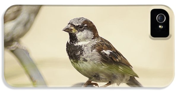 Passeridae iPhone 5 Cases - Free Bird iPhone 5 Case by Greg Thiemeyer