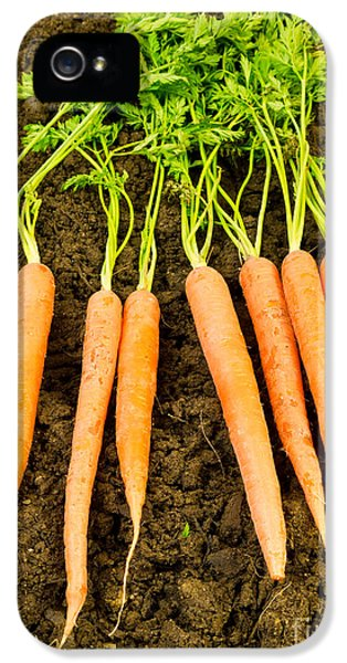 Carrot iPhone 5 Cases - Fresh Carrots iPhone 5 Case by Edward Fielding