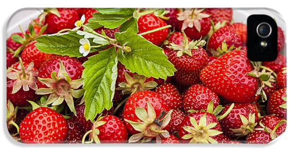 Plastic iPhone 5 Cases - Freshly picked strawberries iPhone 5 Case by Elena Elisseeva