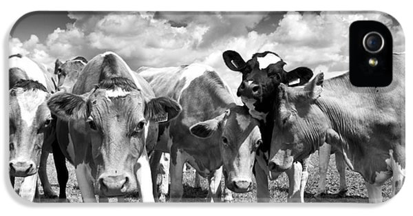 Livestock iPhone 5 Cases - Friendly Cows  iPhone 5 Case by Tim Gainey