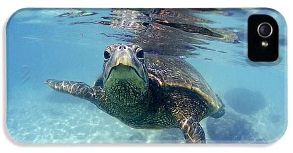 Underwater iPhone 5 Cases - friendly Hawaiian sea turtle  iPhone 5 Case by Sean Davey